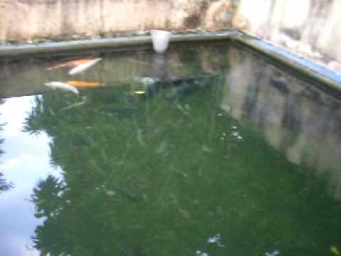 Tanque litros youtube for Tanques de geomembrana para tilapia
