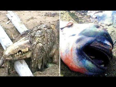 New animals found after tsunami