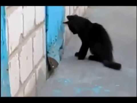 قط يساعد في إنقاذ كلب عالق !