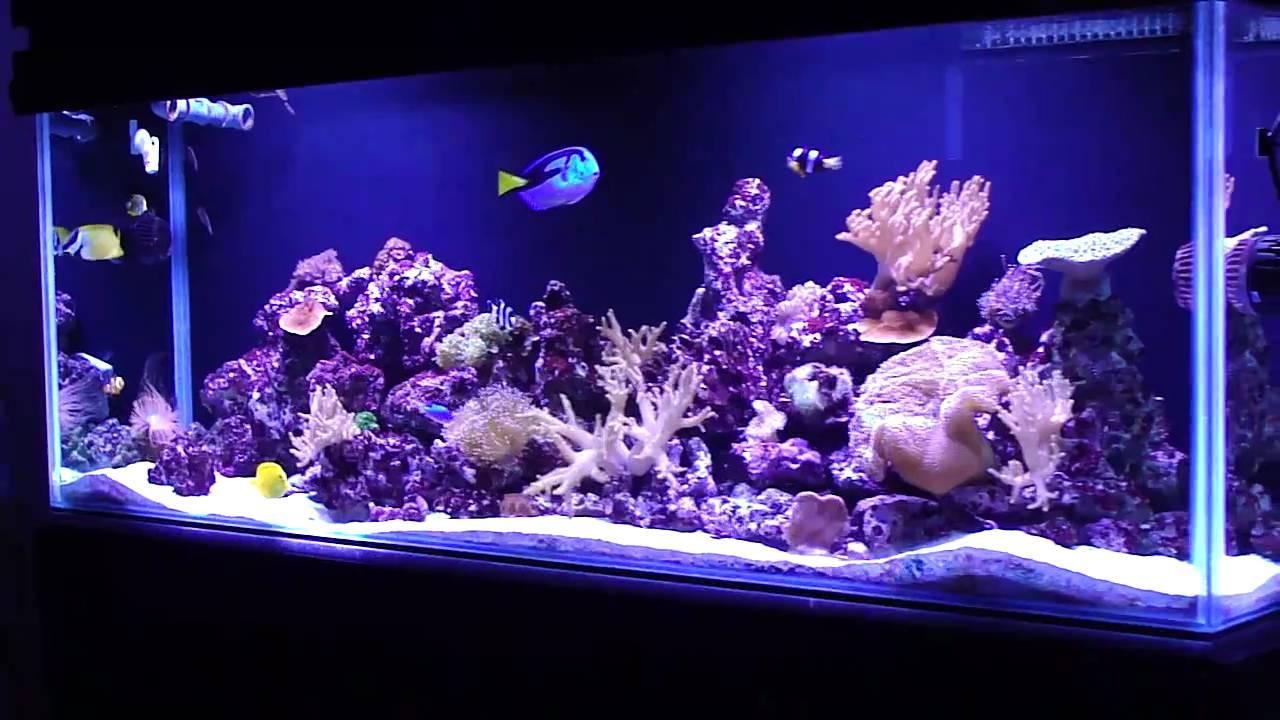 Acuario marino reef marine aquarium abril 2011 youtube for Bomba calefaccion roca pc 1025