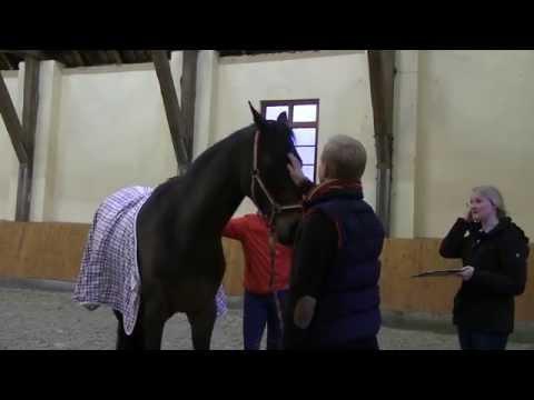 darmentzündung pferd behandlung
