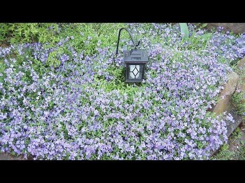 Gartenrundgang April 2017 und der Name des Kaninchens