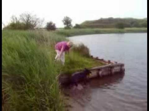 Falling in lake teaching dog to dive