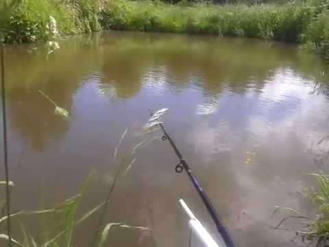 рыбалка на своем дачном пруду