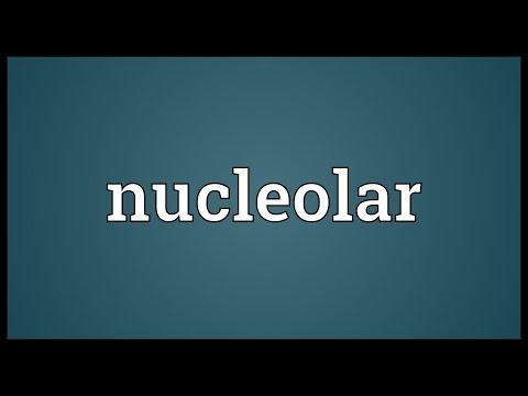Header of nucleolar