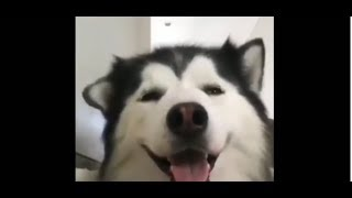 Funny Cats and Dogs Compilation 2019
