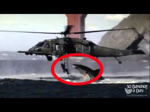 megalodon shark killed a person in 2014 on hawaii 2014-2015 - YouTube