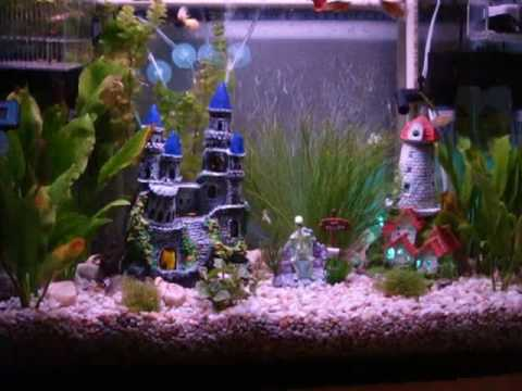 Pecera hanner acuario de agua dulce peces tropicales 80 l for Peces de agua dulce para peceras