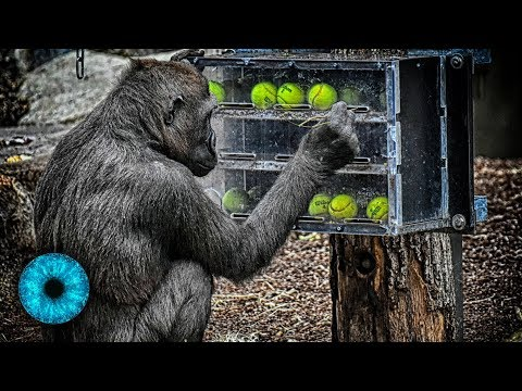 Tiere klüger als gedacht: Vorbild für intelligente Maschinen?! - Clixoom Science & Fiction