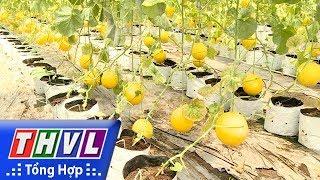 THVL | Chuyên đề kinh tế: Ứng dụng công nghệ sản xuất nông sản theo tiêu chuẩn