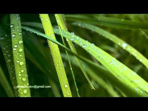 Kavyageethikal: Ardramee Dhanumaasa Raavukalilonnil From Saphalameeyathra By Dileep Cv video