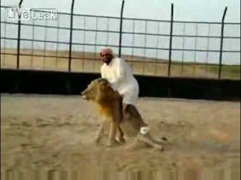 Arab Guy riding a Lion ! whaaaaaaaaaaat ?