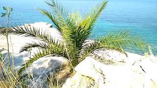 Deep Sleep Delta Waves Music for Meditation Under the Palm Tree 🏝