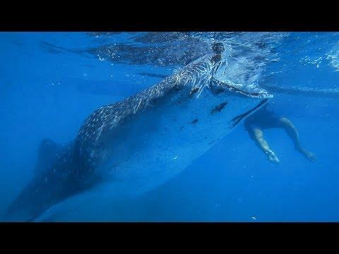 А вам СЛАБО нырнуть к АКУЛАМ в море? Филиппины. Остров Себу. Ослоб