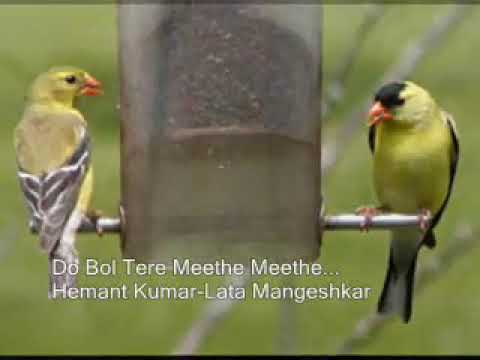 Do Bol Tere Meethe Meethe ... video