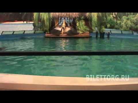 Дельфинарий на ВВЦ схема зала
