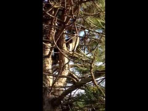 Dillon the tree climber