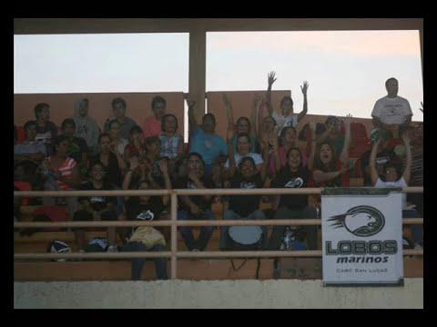 EQUIPO LOBOS MARINOS DE CABO SAN LUCAS Campeones Mustang 2013