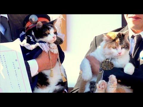 「猫が神になる」日本独自の死生観・文化をすべて体現した、和歌山電鐵「たま大明神」のキャプチャー