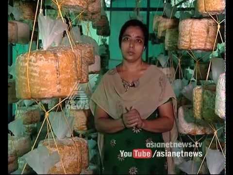Mushroom farm by Usha | Maneed, Ernakulam | Money Time 29 Oct 2015
