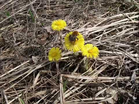 Пчеловодство. Страшна пчёлам не морозная зима, а холодная весна.
