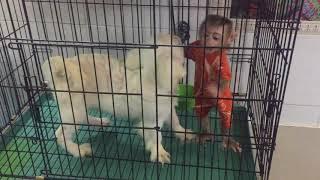 The dog is joking with the monkey/chú cho và bé khỉ Nui nô đùa