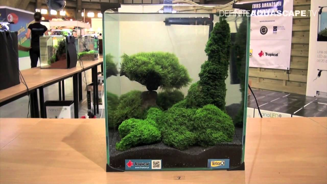 Aquascaping - Aquarium Ideas from ZooBotanica 2012, part 8 - YouTube