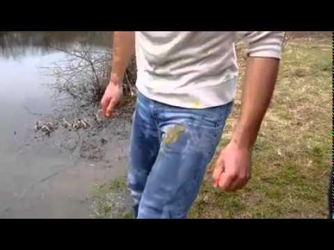 Poribljavanje jezera Starača deverikama i štukama