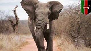Elephant attack: Italian tourist trampled to death by elephant - TomoNews