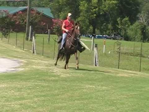 SPEED RACKING MARE FOR SALE VIDEO #3