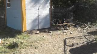 Update guinea success