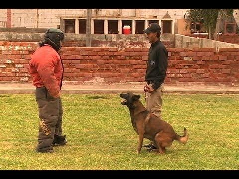 Perros Guardaespaldas: Los mejores amigos también son los mejores defensores