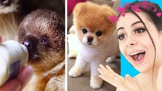 Try Not To Say Aww Challenge (IMPOSSIBLE)
