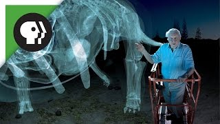 360 degree video: Dinosaur Giant with David Attenborough!