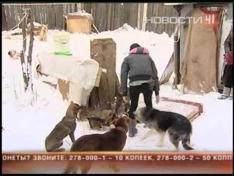 Школьницы организовали приют для собак на огороде
