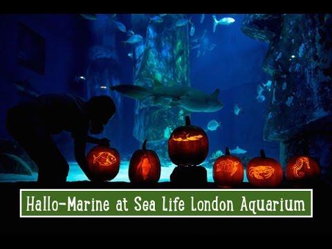 Halloween at Sea Life: London Aquarium