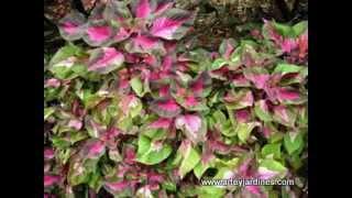 Los colores del jardín  Diseños con plantas.