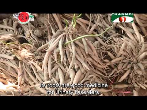Nature and Life - Episode 165 (Rare Medicinal Plant)