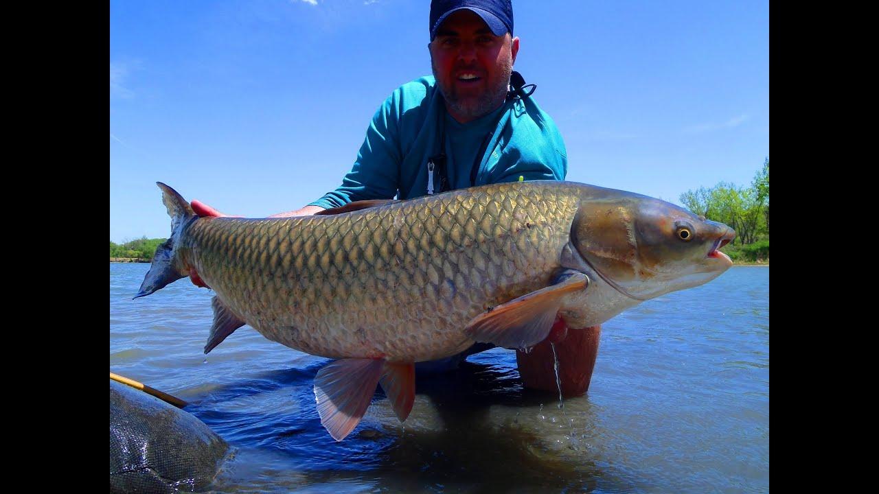 Fly fishing giant grass carp youtube for White amur fish