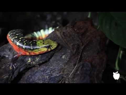 Nature Night Tour in Arenal, Costa Rica