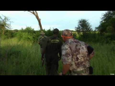 Dallas Safari Clubs Tracks Across Africa - The Black Bulls of Tanzania