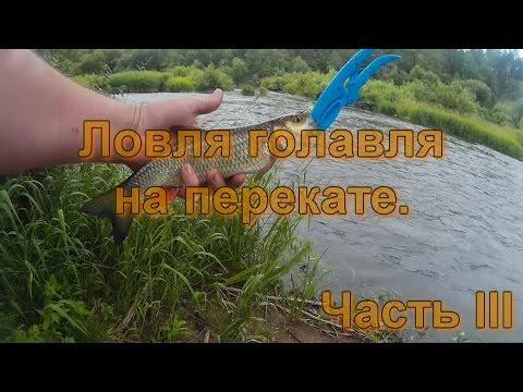 ловля на шелковицу