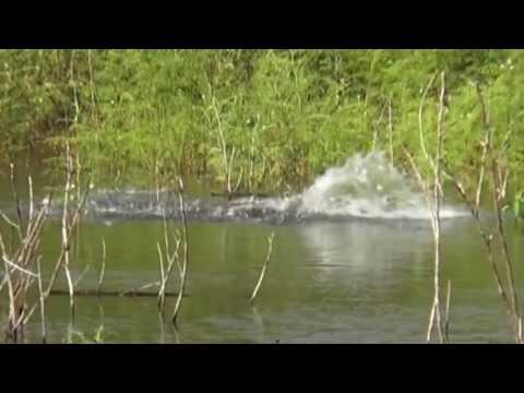 Fishing Thailand OWEN-Z  ชะโดยักษ์