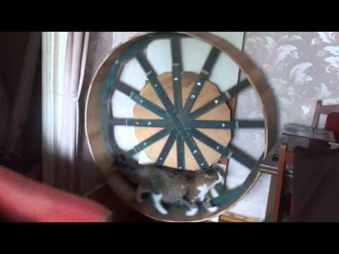 Беговое колесо для кошек сделать своими руками 97