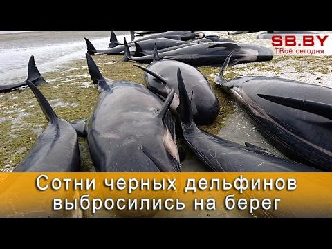 Почему дельфины выбрасываются на мель