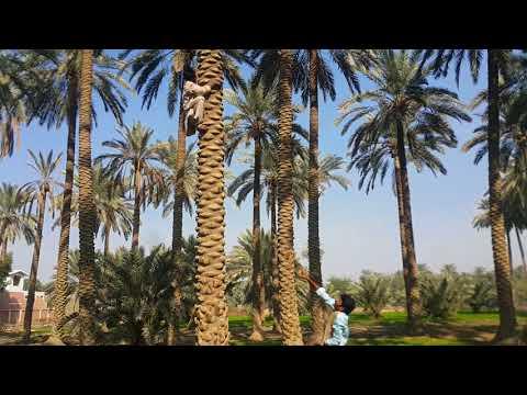 bachy ki iphone k liye zidd | IPhone x | Asghar Khoso | Funny Video | Ghulam