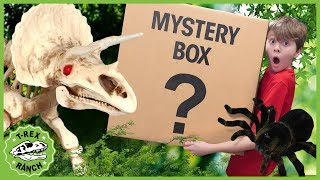 Dinosaur Skeleton Surprise! Kids Adventure with Giant Pretend Play Spider Toy & Mystery Box