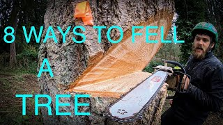 WORLD'S BEST TREE FELLING TUTORIAL! Way more information than you ever wanted on how to fell a tree!