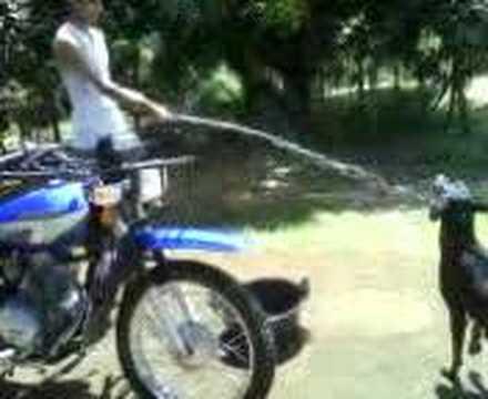 Perro tomando agua de manguera youtube - Mangueras de agua ...