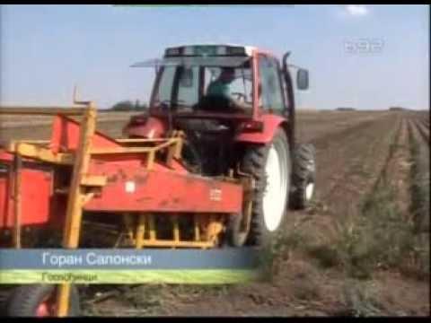 Vadjenje krompira - kako do prinosa od 69 t/h - YouTube